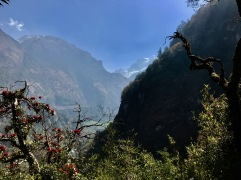 View back to Manaslu from climb to Chame