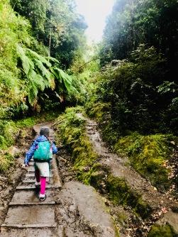 Into the Valdivian rainforest